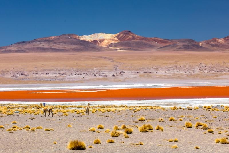 Südamerika-976