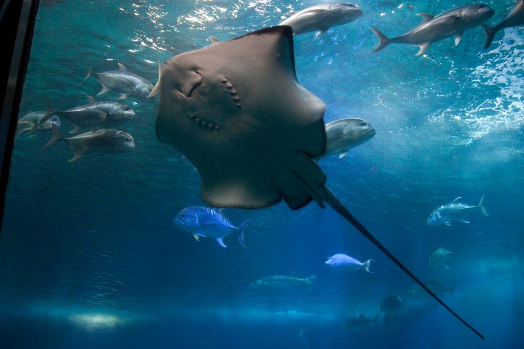 Maui_Aquarium