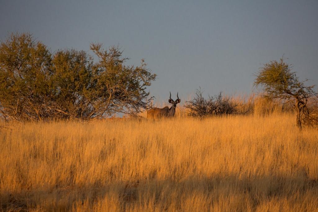 Namibia_Kalahari