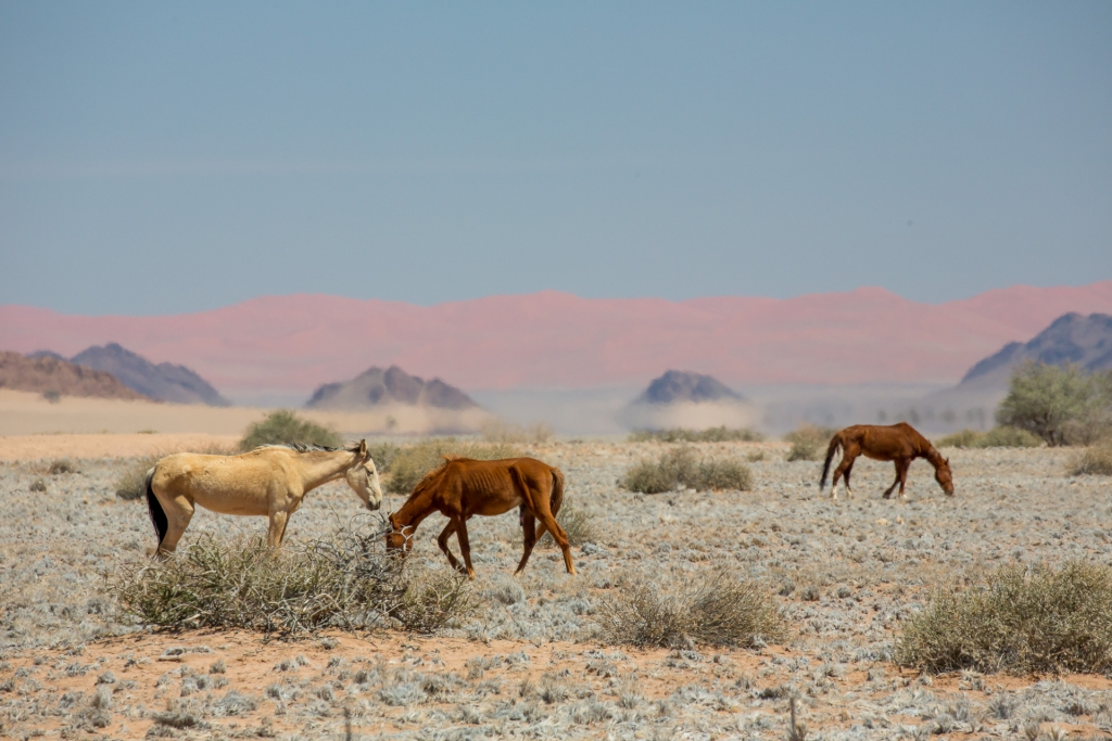Namibia_Wüstenpferde