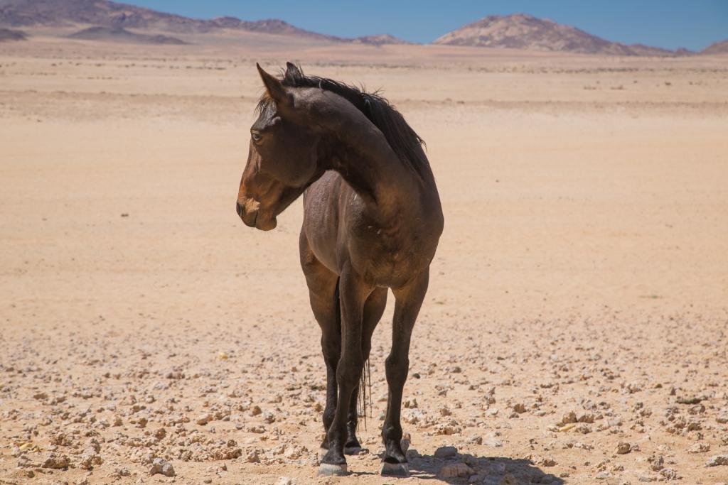 Namibia_Aus