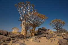 Namibia_Köcherbaumwald