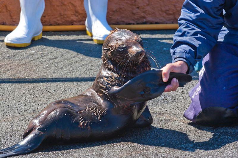 neuseeland, Seal