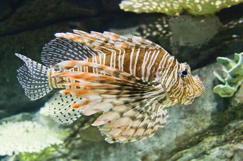 neuseeland, Aquarium