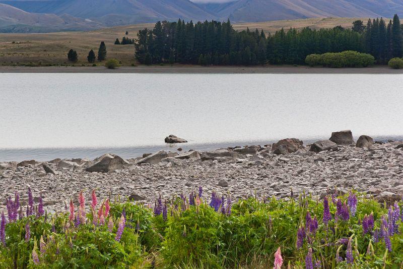 neuseeland, Lake Tekapo