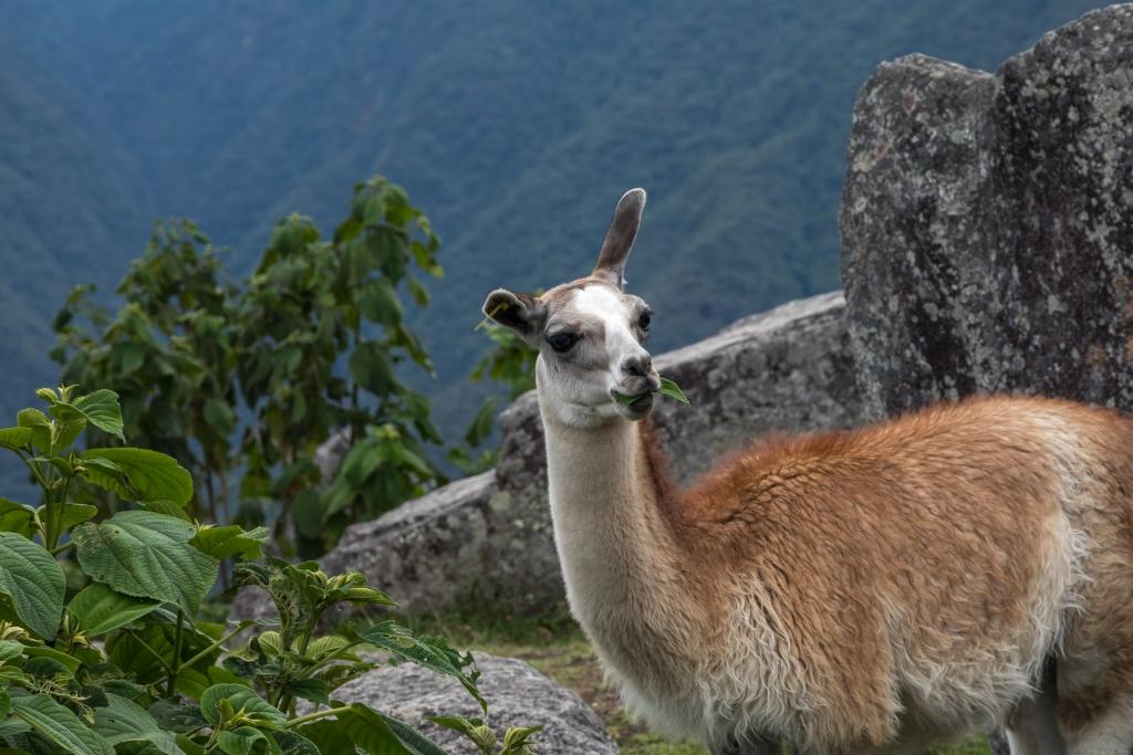 Peru_0159_Machu Picchu