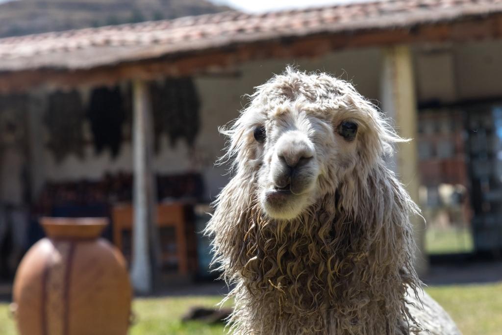 Peru_0173_Altiplano