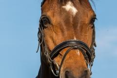 Pferdeportrait-8032
