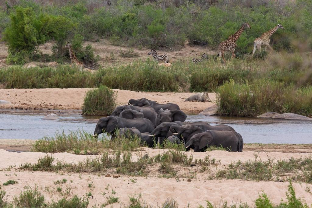 Südafrika_Elefanten