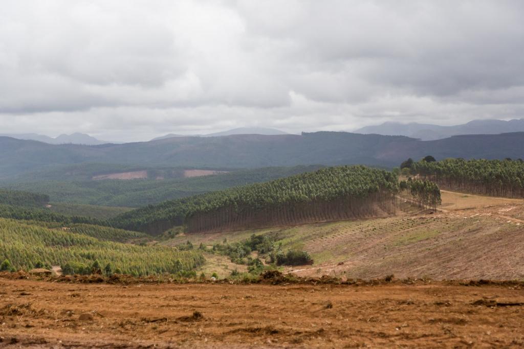 Südafrika_Forstwirtschaft