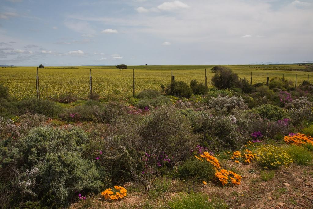 Südafrika_Oudthoorn