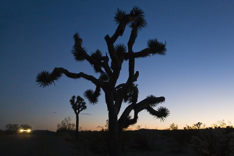 Joshua Tree NP USA