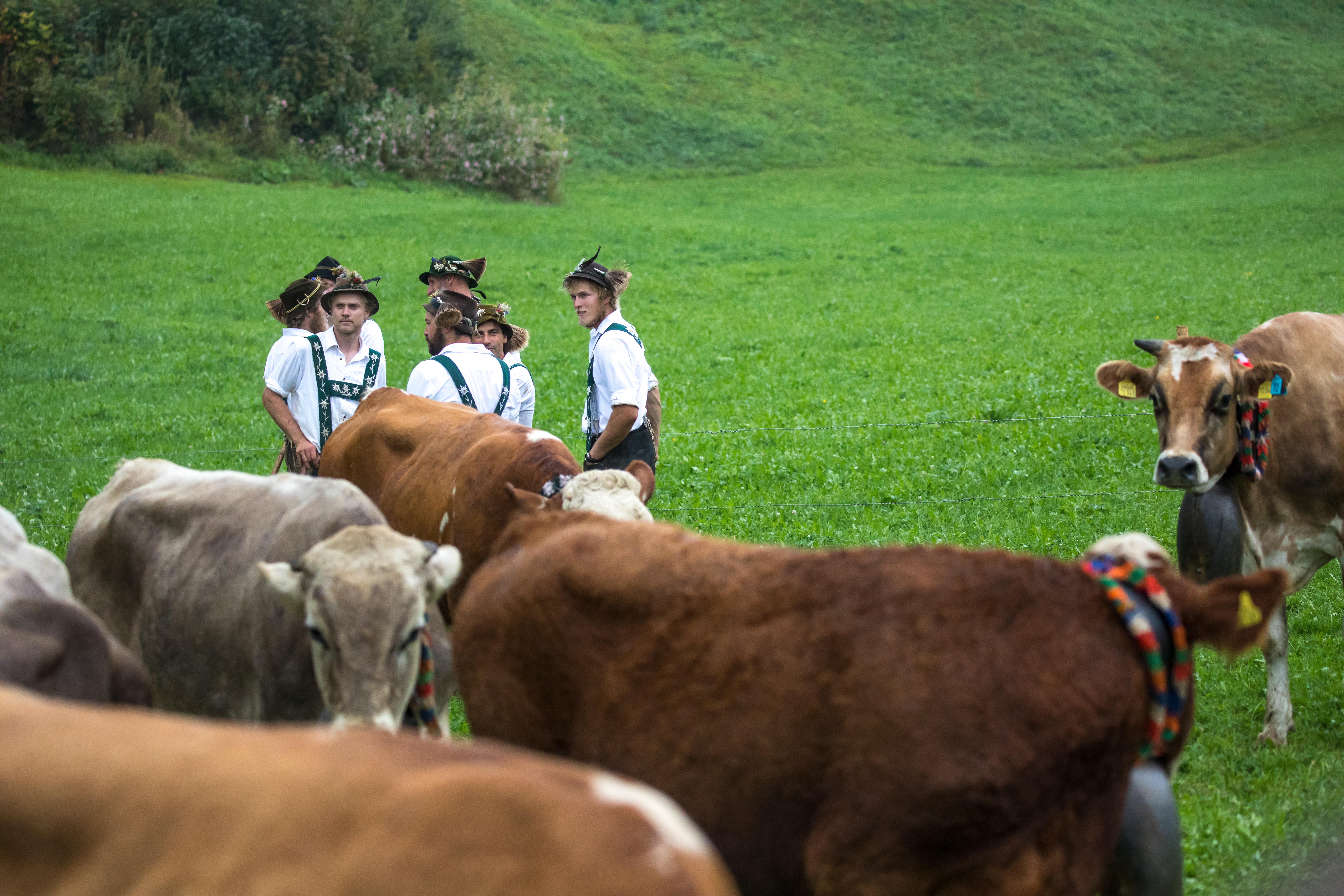 Viehscheid